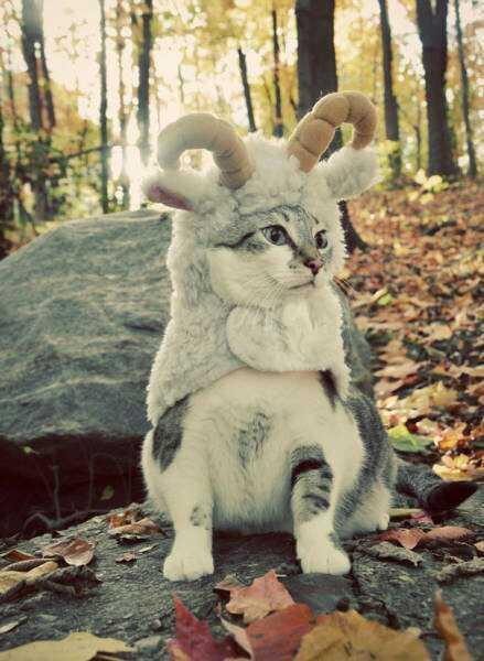 装扮:在森林迷失的小绵羊