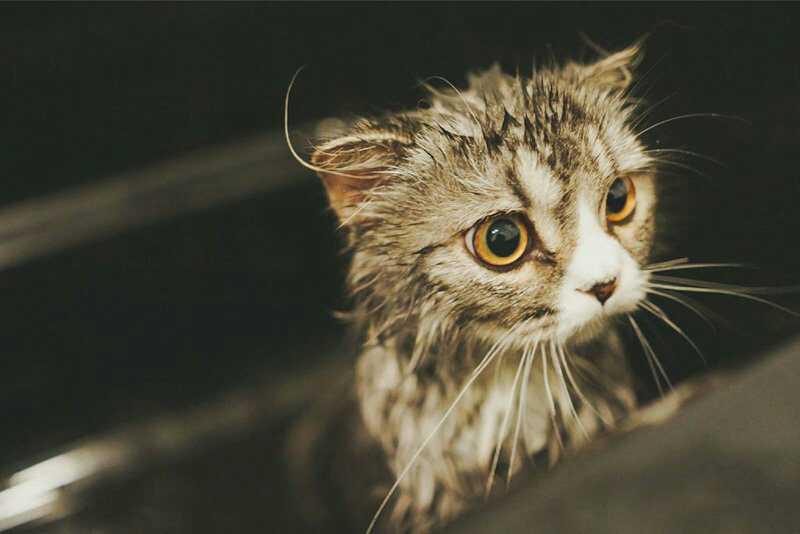 洗澡中的猫咪,眼中是满满的不甘