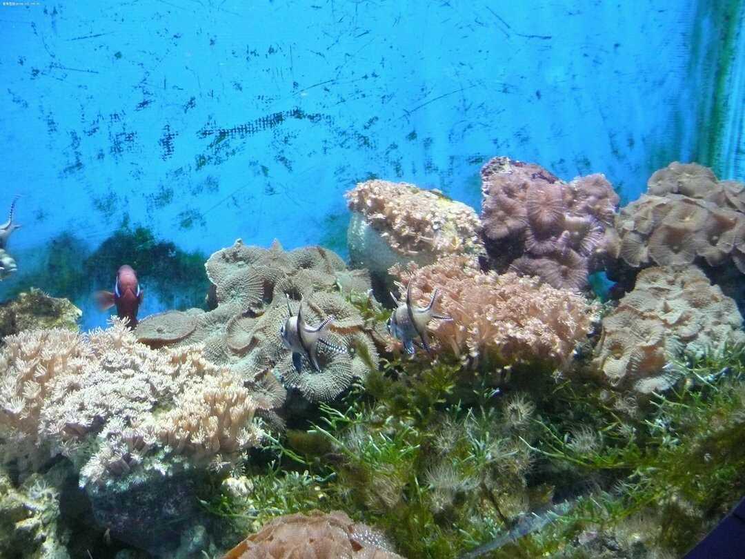 皇后镇海底世界高清照片