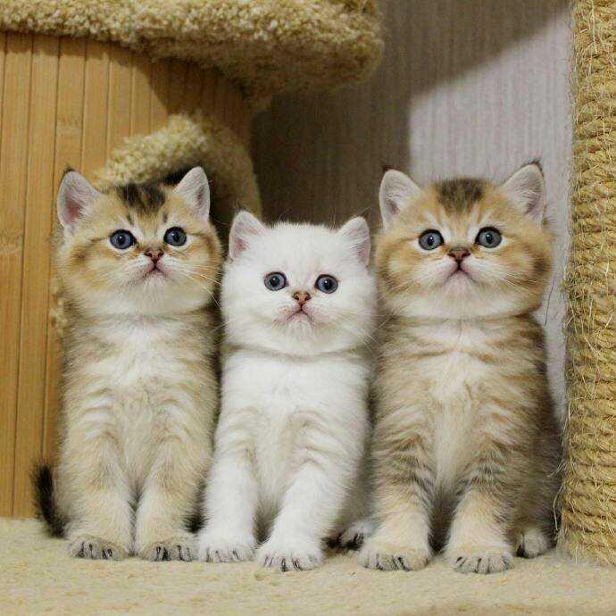 三胞胎的超萌喵星人