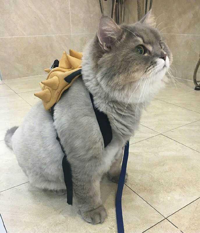 装扮:背着书包上学去的咪咪