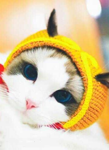 装扮戴帽子的小可爱