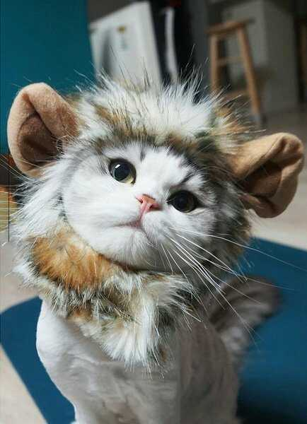 装扮:我是骄傲的小狮王萌萌哒