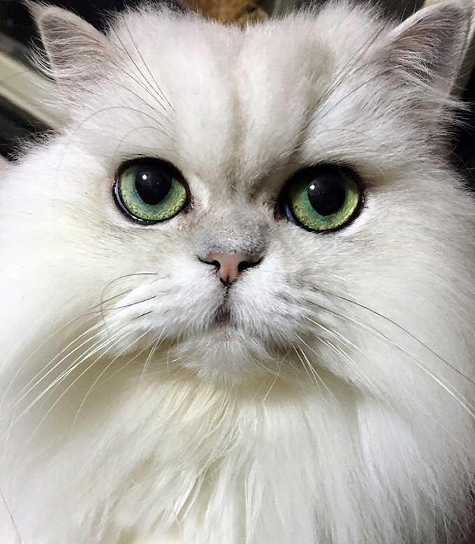 被这样的大眼睛盯着,让人受不了
