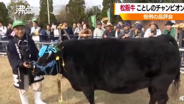 1头牛168万人民币!日本拍出天价松阪牛,网友:身价比我高